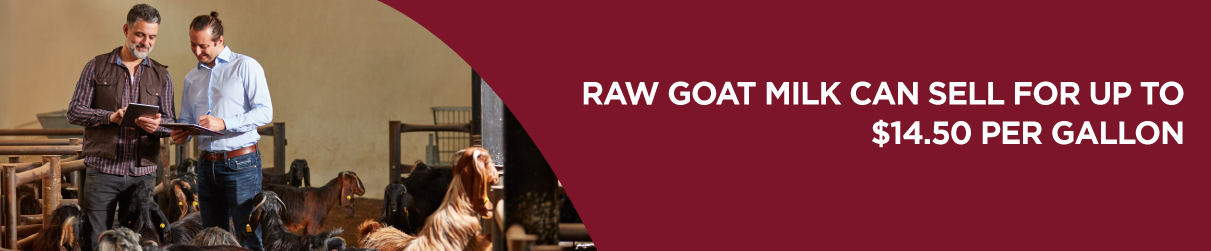 Raw goat milk can sell for up to $14.50 per gallon